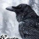 raven-68